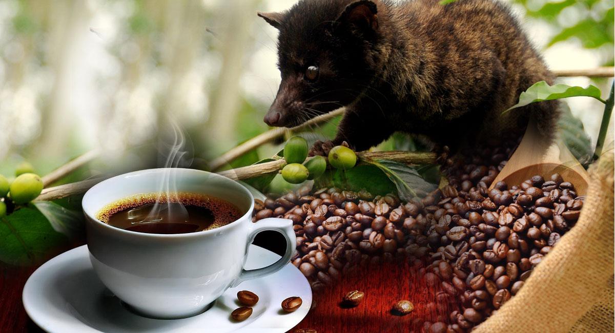 https://www.coloffdigital.com/wp-content/uploads/2017/07/coffeeplantation-luwakcoffee.jpg